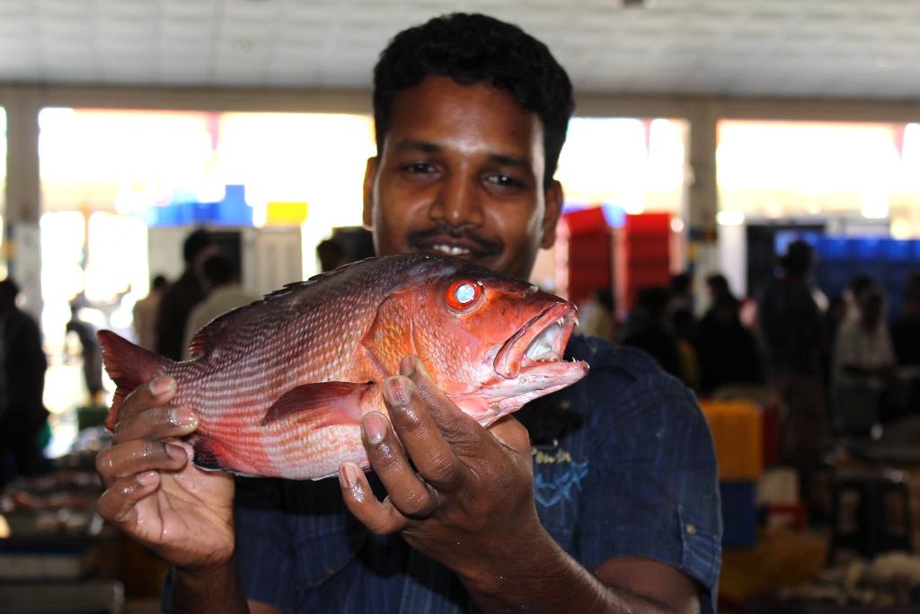 m1 - Fischmarkt von Colombo