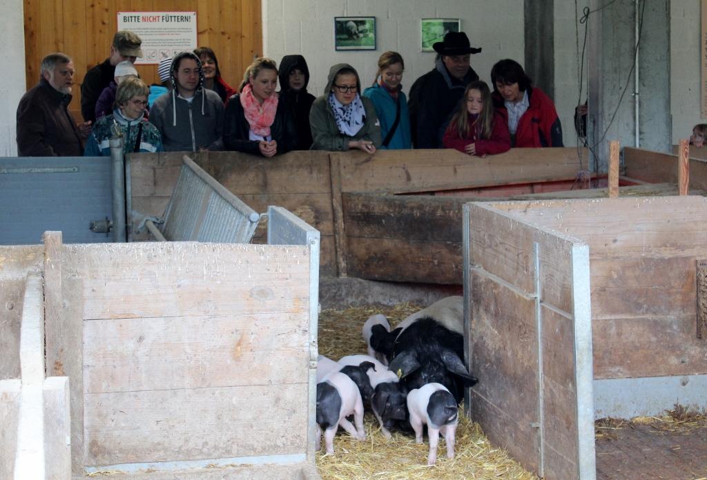 18 Schwein