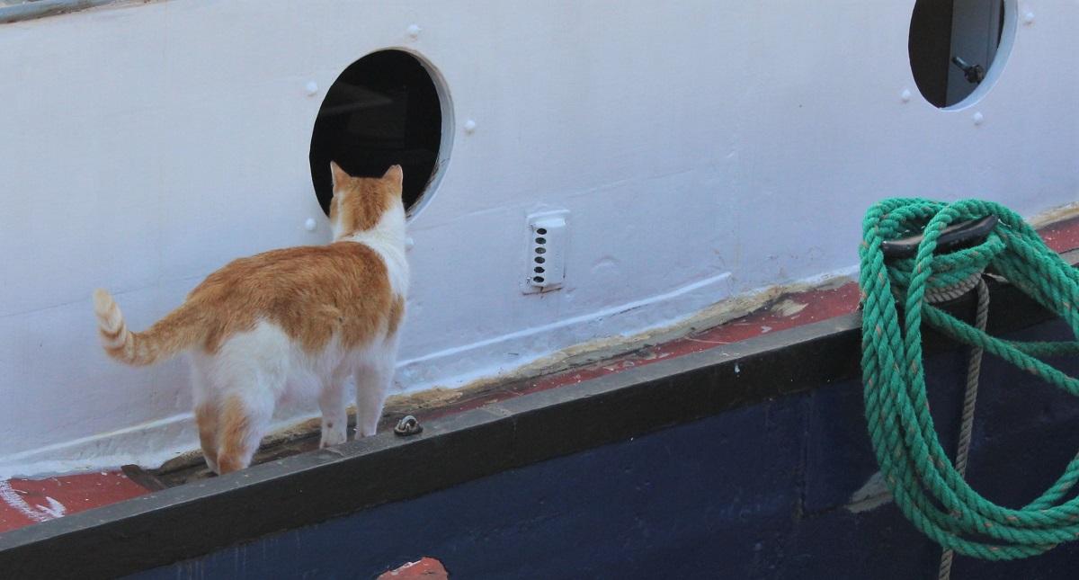 15 - Hausbootkatze