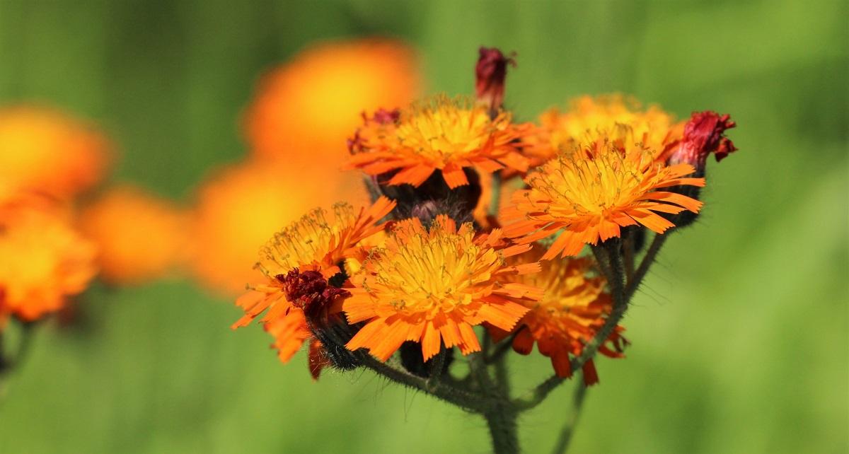 4 Blumen
