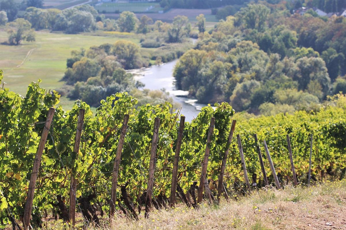 Weinreise Nahe Laubenheim Karthäuser