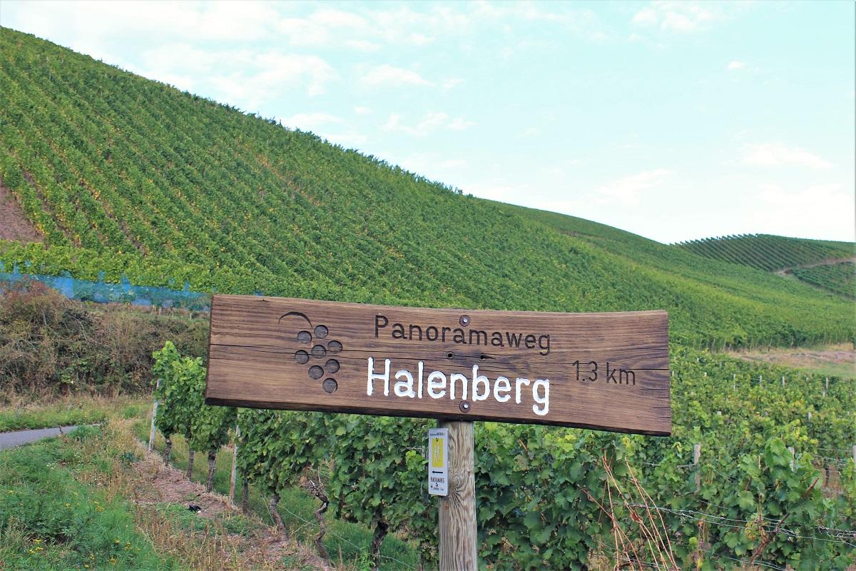Weinreise Nahe Monzingen Halenberg