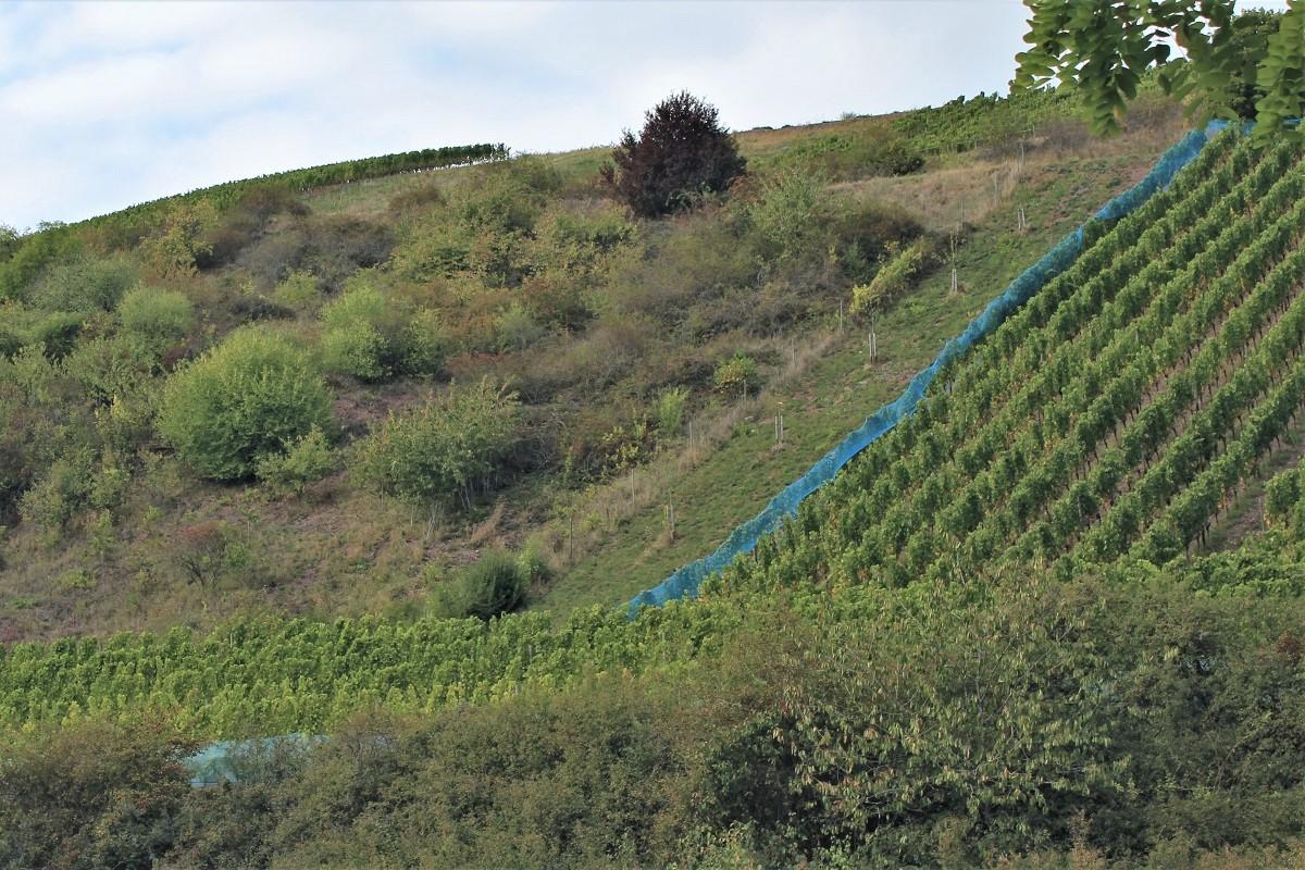 Weinreise Nahe Monzingen Auf der Ley