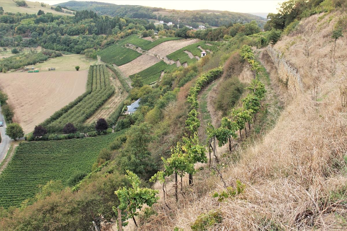 Weinreise Nahe Odernheim Kloster Disibodenberg