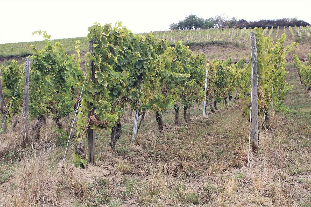 Weinreise Nahe Oberndorf Beutelstein