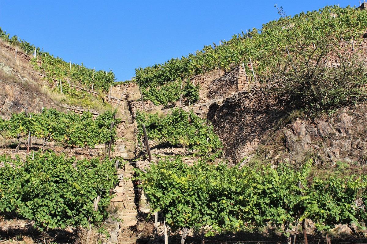 Weinreise Nahe Weinterrassen