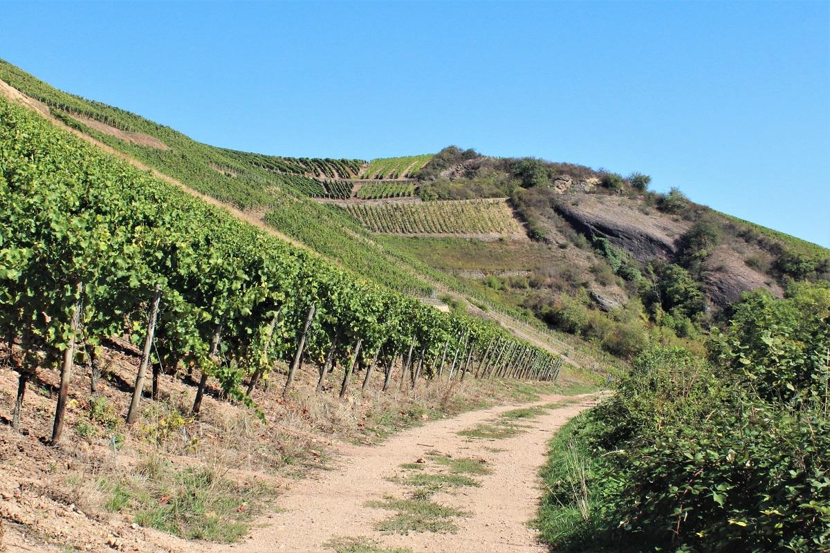 Weinreise Nahe Dorsheim Goldloch