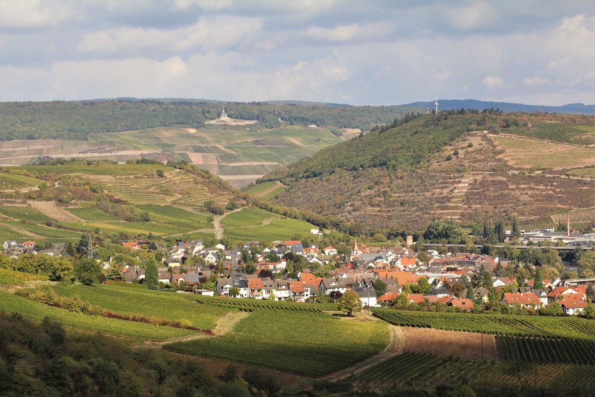 Nahe Laubenheim Karthäuser Blick zum Rheingau