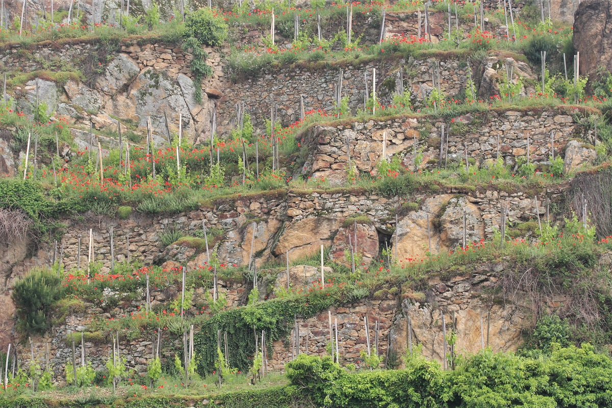 Wein Rhone Cote Rotie