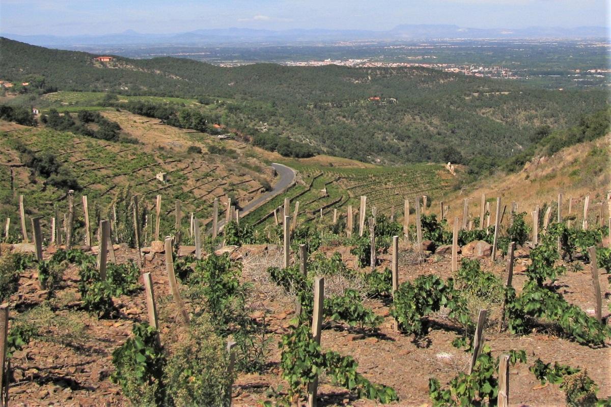Wein Roussillon Collioure
