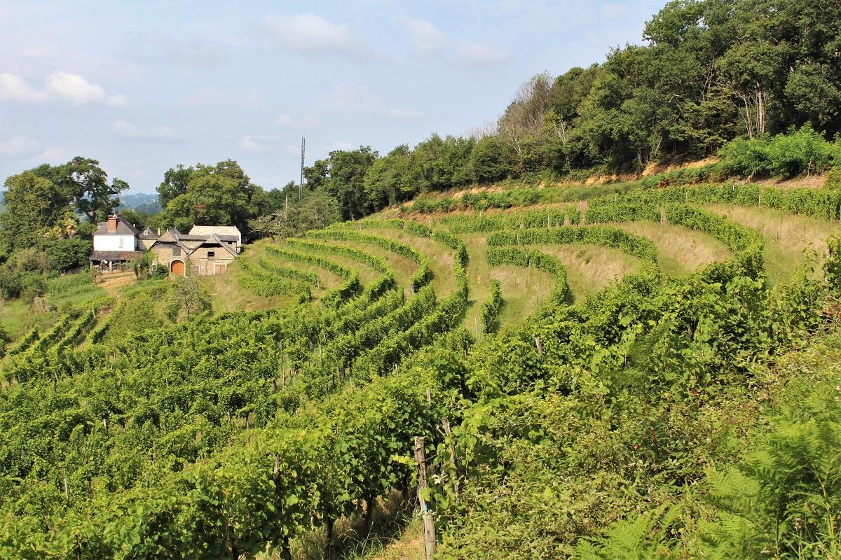 Wein Jurancon Guirardel