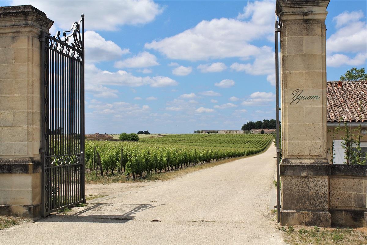 Wein Frankreich Bordeaux Yquem