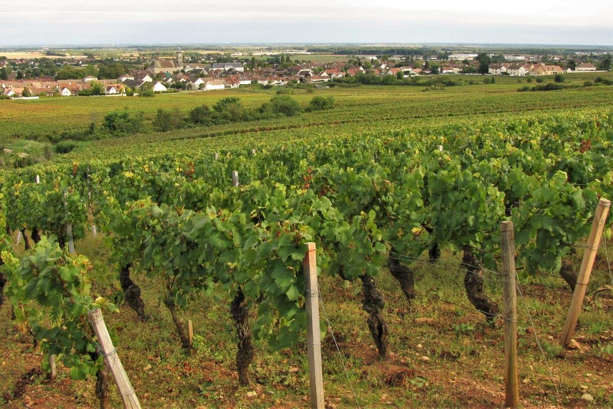 Wein Burgund Marsannay