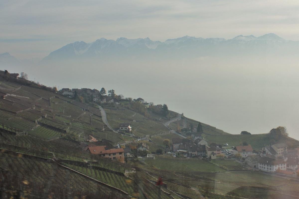 Schweiz Genfer See Wein