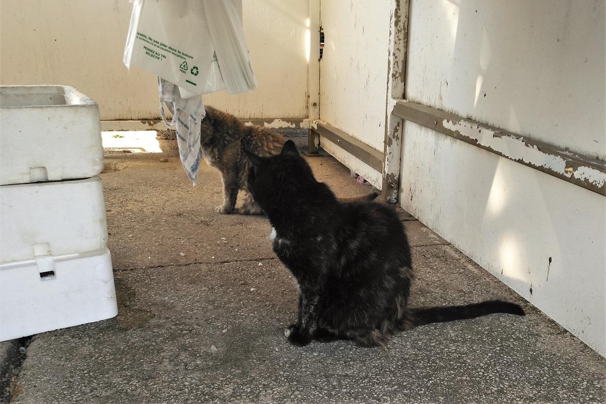 Katzen Fischmarkt