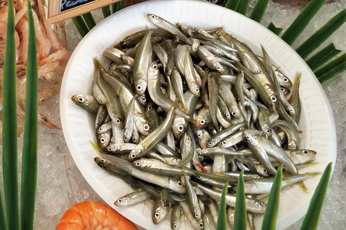 Jols Joels Frankreich Fisch