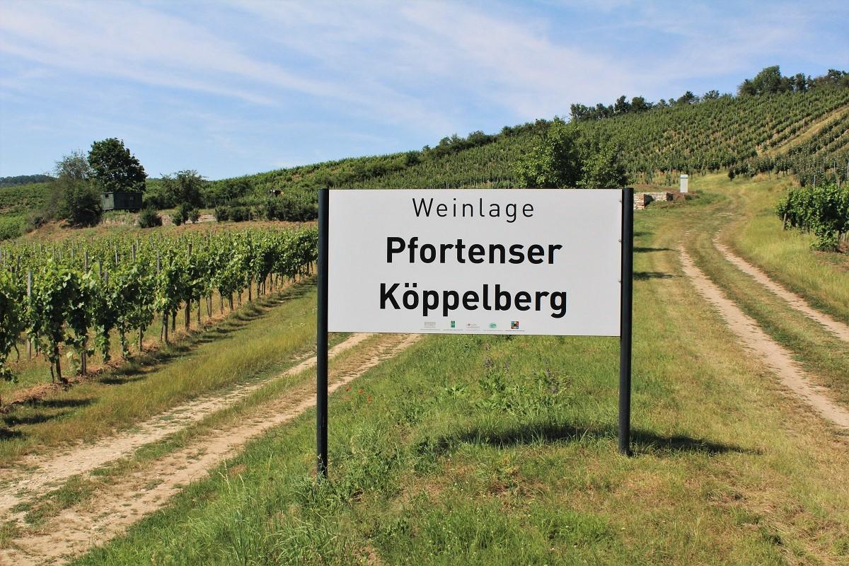 Saale-Unstrut Weinberg Pfortenser Köppelberg