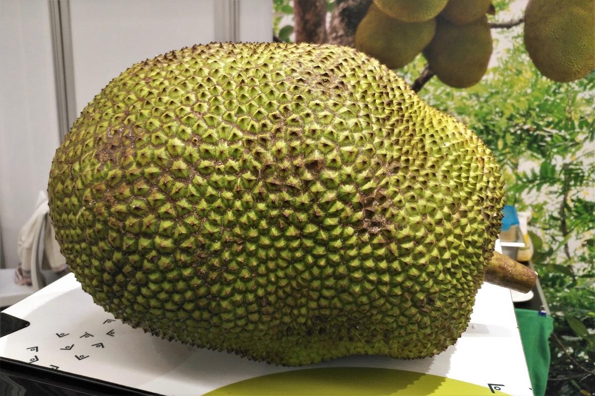 Jackfruit Biofach 2020