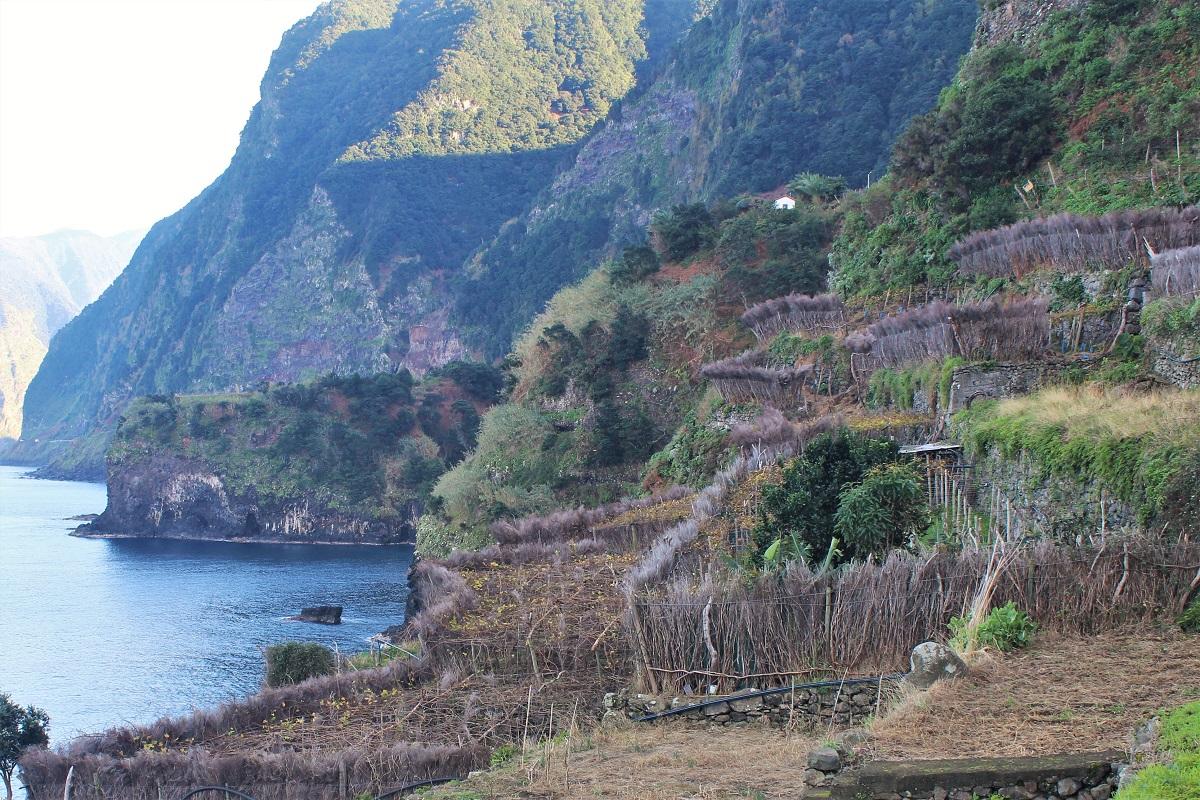 Madeira Nordküste Sercial Weinbau