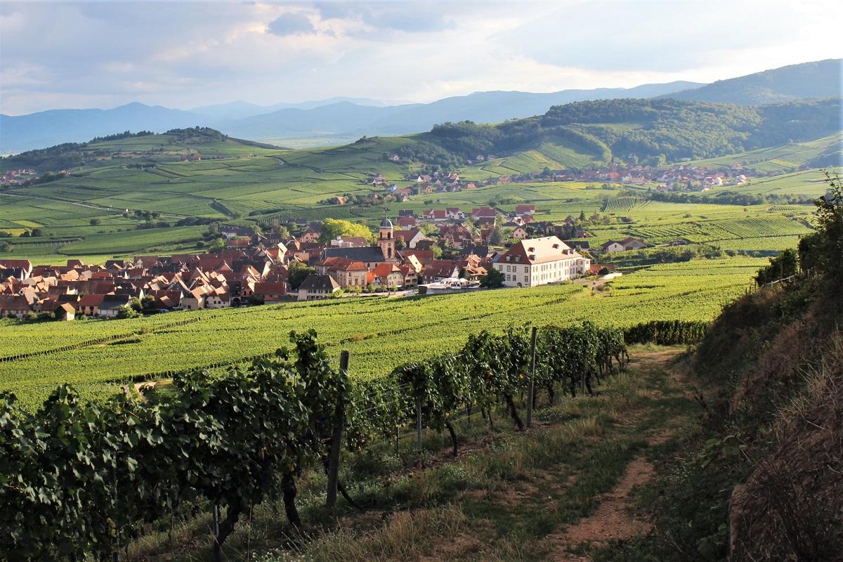 Elsass Wein St-Hippolyte