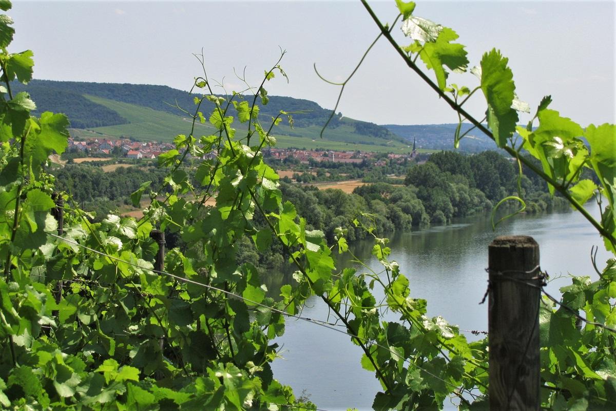 Blick auf Thüngersheim