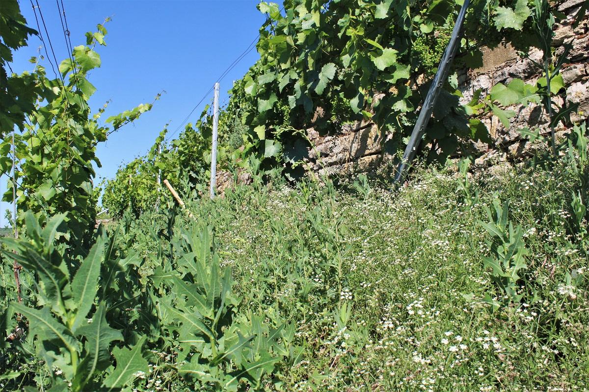 Bio Weinbau