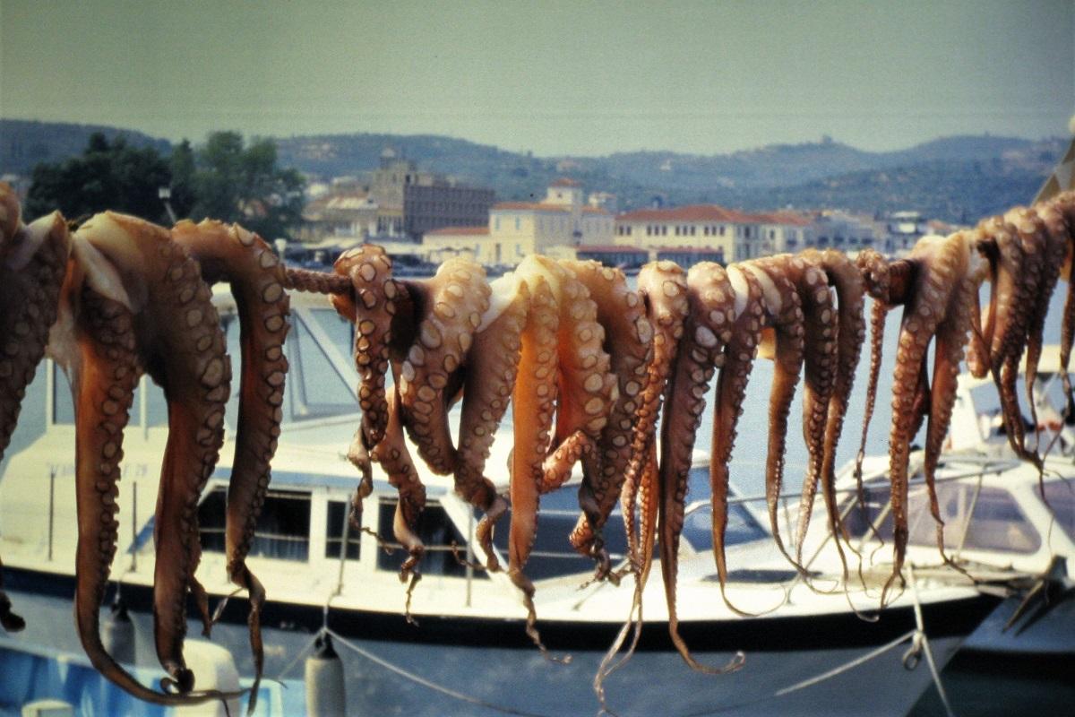 Tintenfisch Griechenland