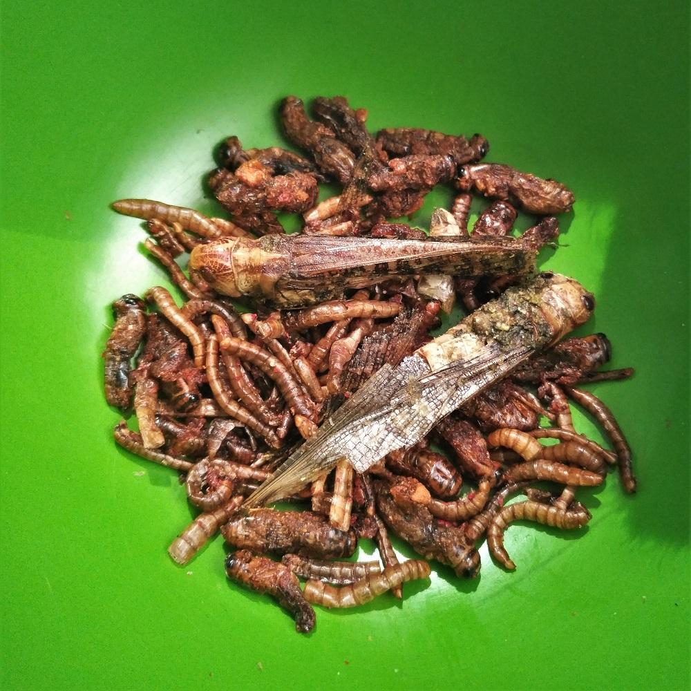 Insekten Snack