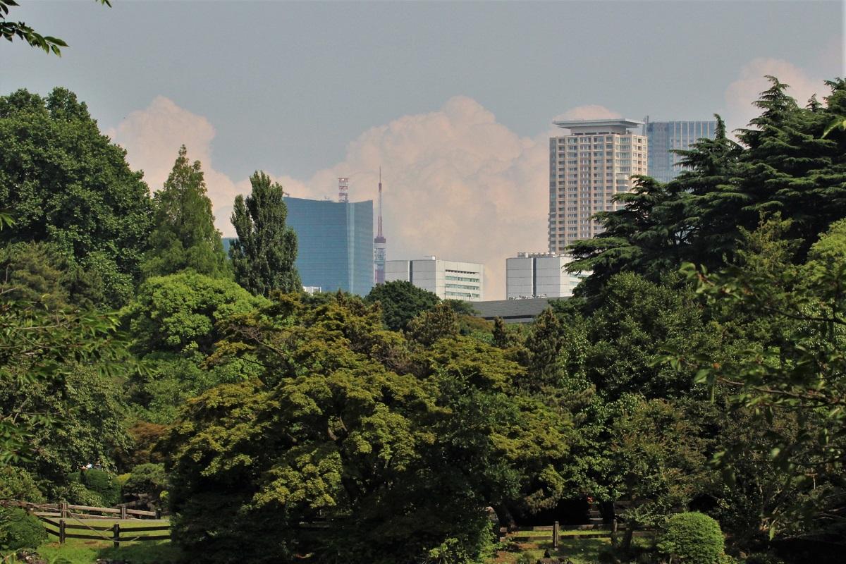 Shinjuku Wolken