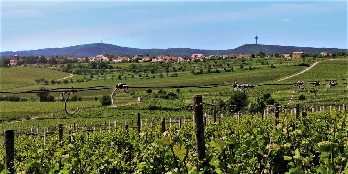 Terroir Herxheim am Berg Pfalz