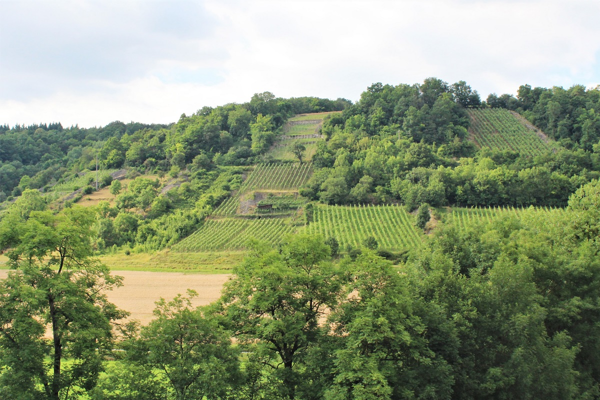 Weinfranken Silvaner-Schau