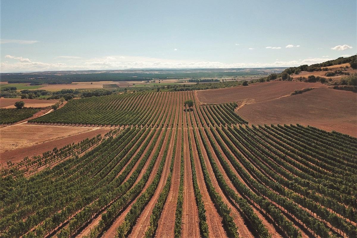 Ribera del Duero rote Böden